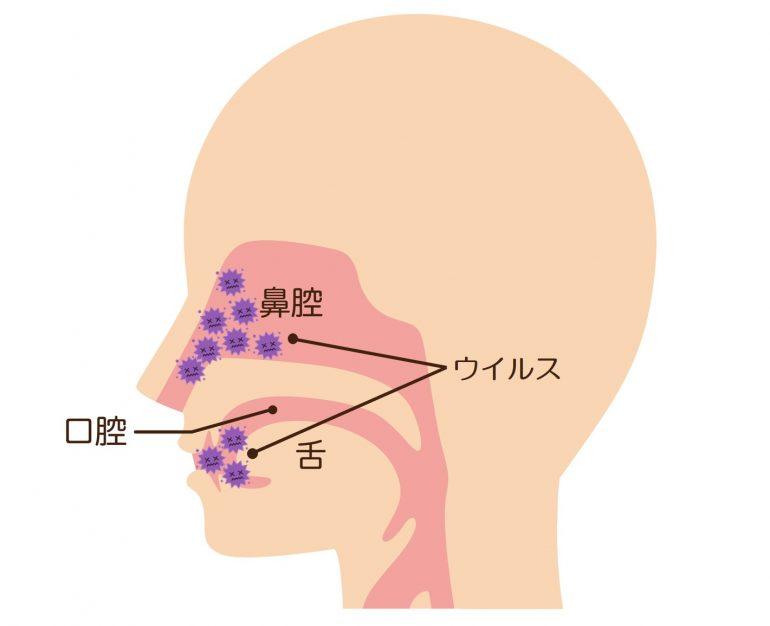 新型コロナウイルスは主に口腔内(舌裏)で増殖